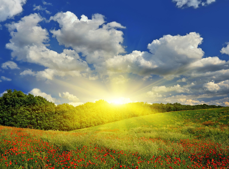 Картинки солнышко в природе
